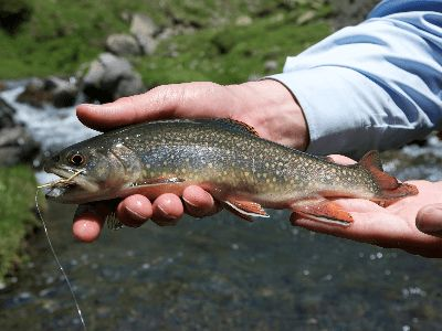 A brook trout caught while fishing