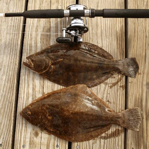 The Best Flounder Fishing Tips